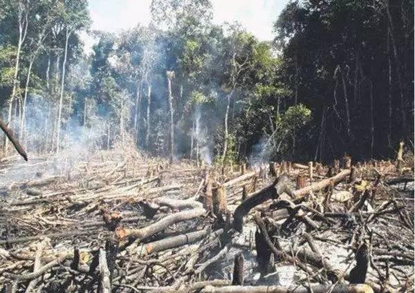 中國大陸森林焚燒